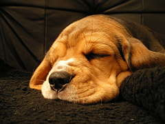 cosmashiva, Hund von Rechtsanwalt Pöppel